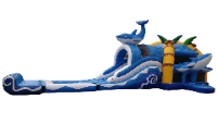 Dolfijn met plonsbadje